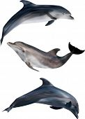 stock photo of dolphin  - illustration with dolphins isolated on white background - JPG
