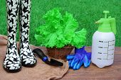 pic of rough-water  - Rubber Boots Watering Can Spade Gloves And Basket With Green Salad Plant On Rough Wood Desk - JPG