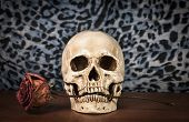 picture of eye-sockets  - Still life white human skull on wooden table - JPG