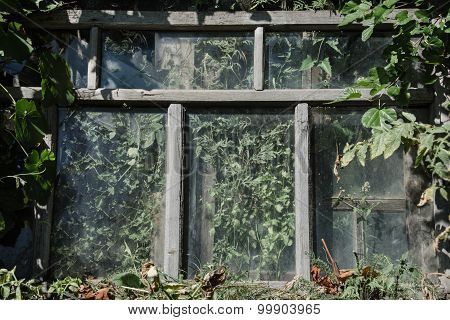 The Abandoned Window