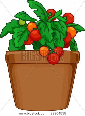 Illustration of a Potted Tomato Plant Being Grown Indoors