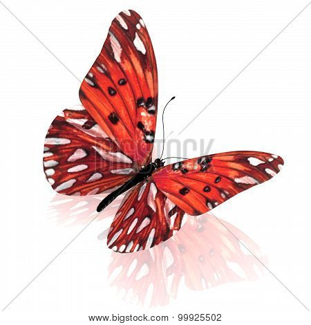 Butterfly. Isolated on white background.