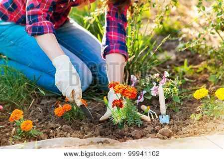 Close-up of woman hands gardening