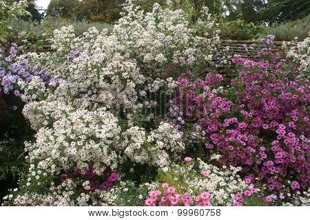 White, pink and lilac flowers in a flower bed
