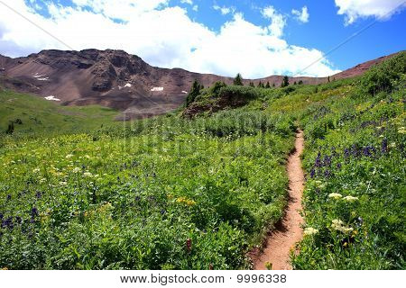 Path in Alpine flowers