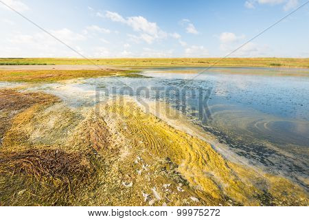 Picturesque Wetland In The Summer Season