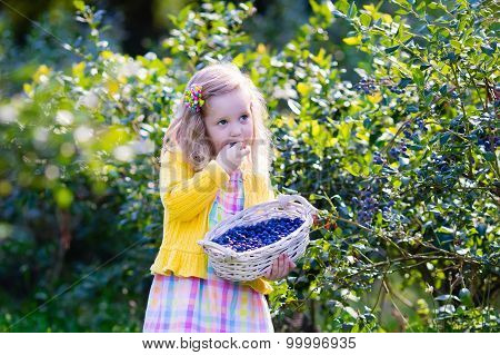 Little Girl Picking Blueberry